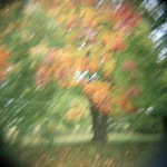 "Laura Cali ""Untitled (Autumn Tree), Preston Hollow, New York, 2010"" C-Print, 10x10 $100"