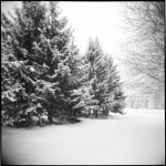 "Laura Cali ""Untitled (Winter Tree), Preston Hollow, New York, 2009"" C-Print, 10x10 $100"